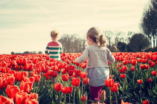 mejor época plantar tulipanes