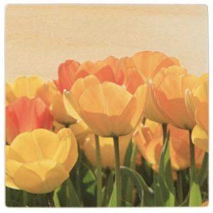 posavasos-de-tulipanes