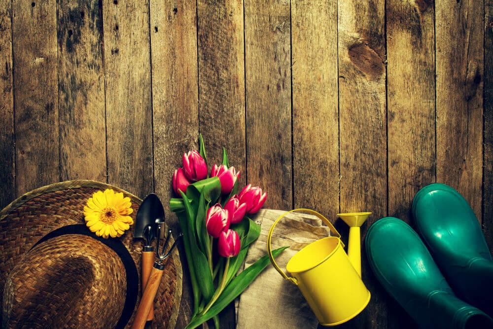 aprende-plantar-tulipanes