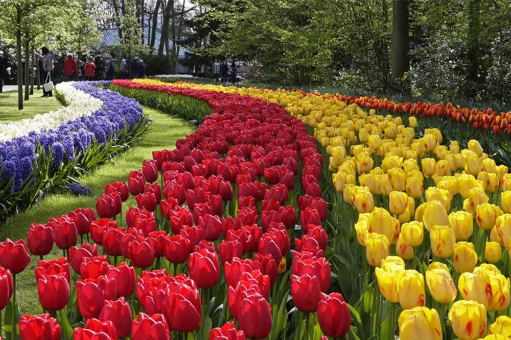 paises tulipanes
