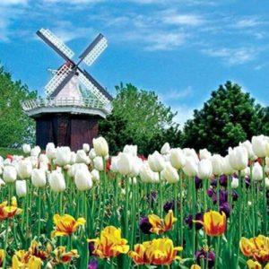 producto-puzzle-tulipanes-molinos-campo