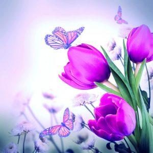 producto-servilletas-tulipanes-morados-mariposas