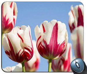 producto-tapete-tulipanes-rembrandt