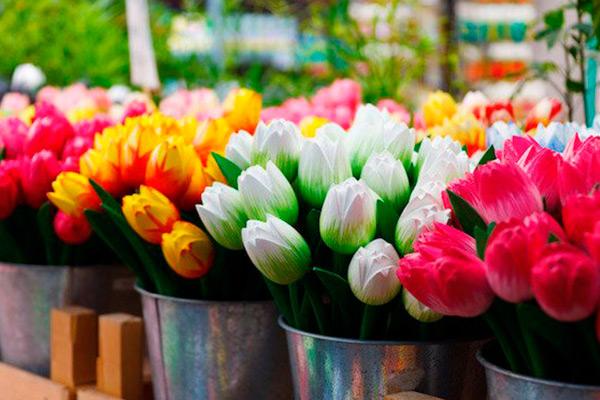 tulipanes en la actualidad