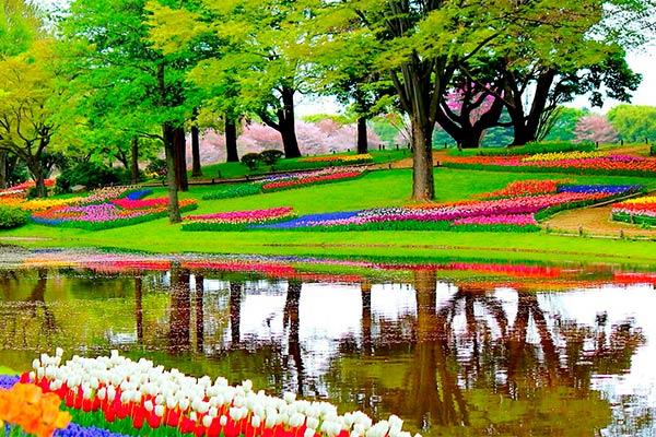 Tulipanes paises bajos
