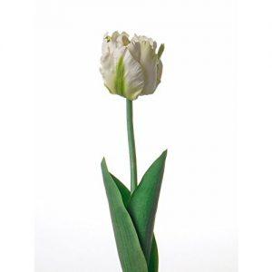 Artificial-Lorina-blanco-tulipan-papagayo