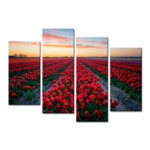 cuadro-tulipanes-amanecer